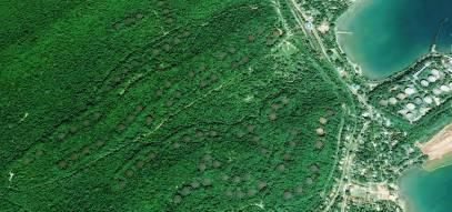 Trinco Oil Farm